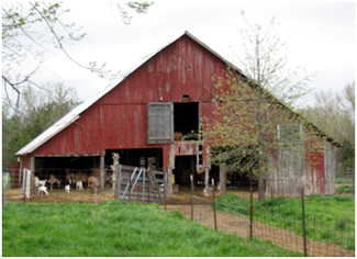 A sheep barn