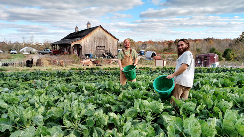 Farmers harvesting vegetables at Willowsford Farm