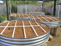 Backyard Aquaponics in Western Australia.