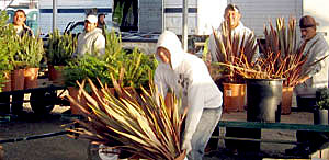 workers in a nursery