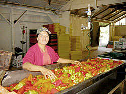 warehouse worker with peppers