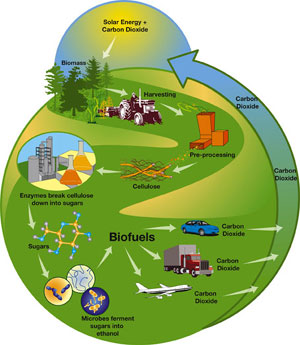 Cellulosic biofuels