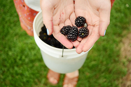 market health benefits of blackberries and raspberries