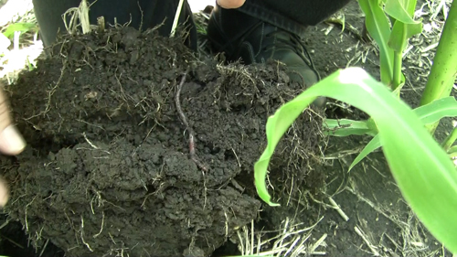 No-till soil structure with good aggregation