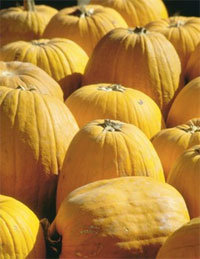 Pumpkins, courtesy of ClipArt.com