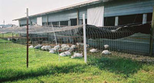 Small poultry house with yard.