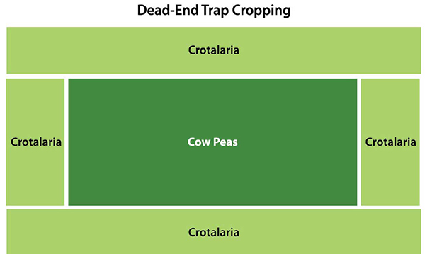 dead-end trap cropping