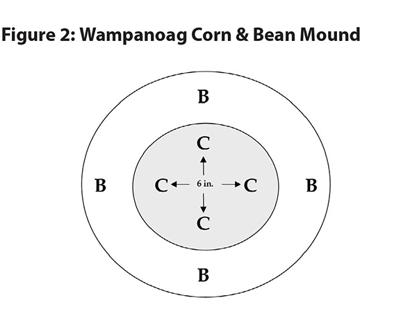 sampanoag corn & bean mound