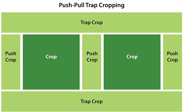push pull trap cropping