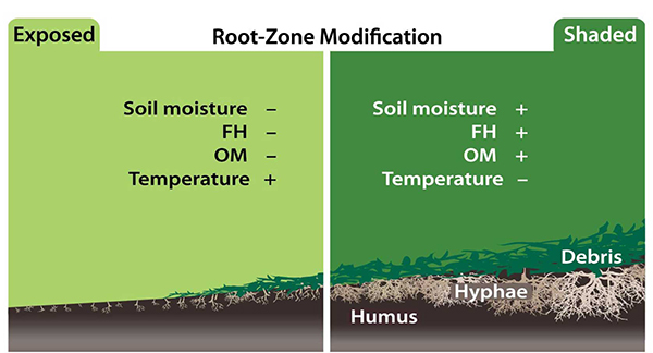 root zone modification
