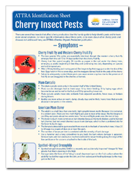 cherry_insects.png