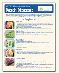 peach_diseases_diagnostic_key.png