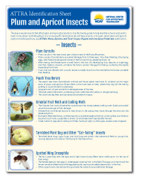 plum_insects.png
