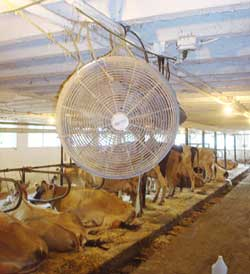 Circulation fan in dairy barn.