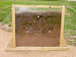 Dung beetle life cycle viewing chamber