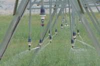Irrigation Example, NCAT photo