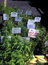 Potted herbs for sale at the USDA Farmers' Market in Washington, D.C.