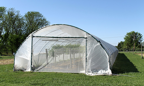 5-foot by 200-foot Haygrove Super Solo High Tunnel