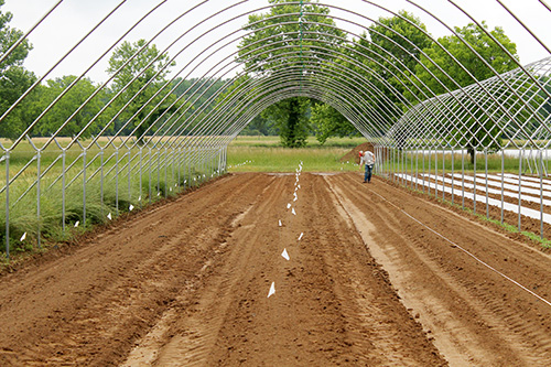 soil that has been amended and tilled at Barnhill Orchards to prepare for grape planting