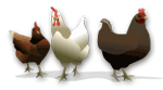 Poultry graphic