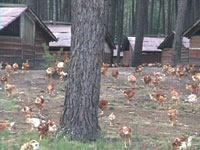 Portable poultry houses