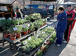 Customers select herb plants at a farmers market