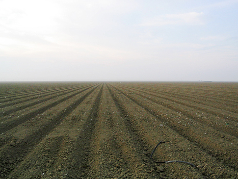 Large expanse of bare soil