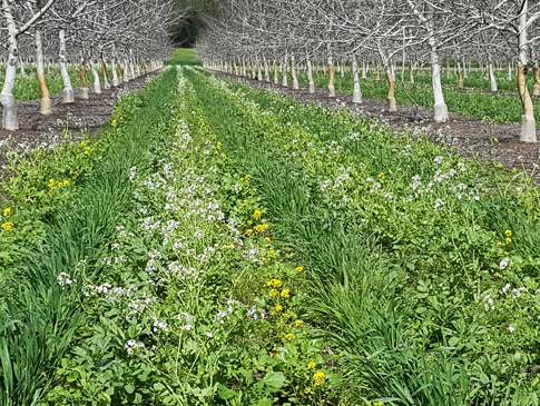 A diverse cover crop of more than a dozen species of grasses, legumes, and mustards