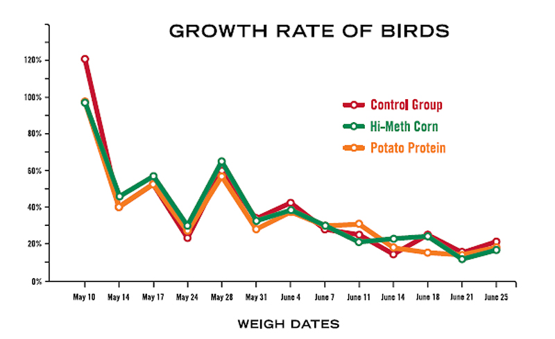 growth rate of birds