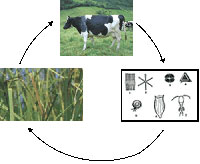 Nutrient Cycling in Pastures - www.clipart.com