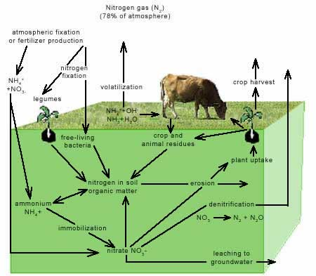Figure 5. Nitrogen Cycle
