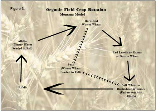 Organic Field Crop Rotation Chart