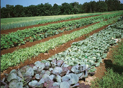 varied organic crop production, vegetables, Texas