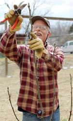 Guy K. Ames pruning a fruit tree