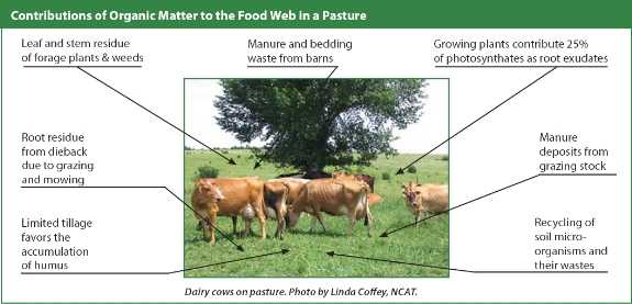 organic matter belonging to the food web in a pasture