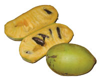 pawpaw sliced open