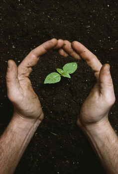 Photo of hands cradling seedling. - clipart.com
