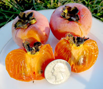 persimmon with scale