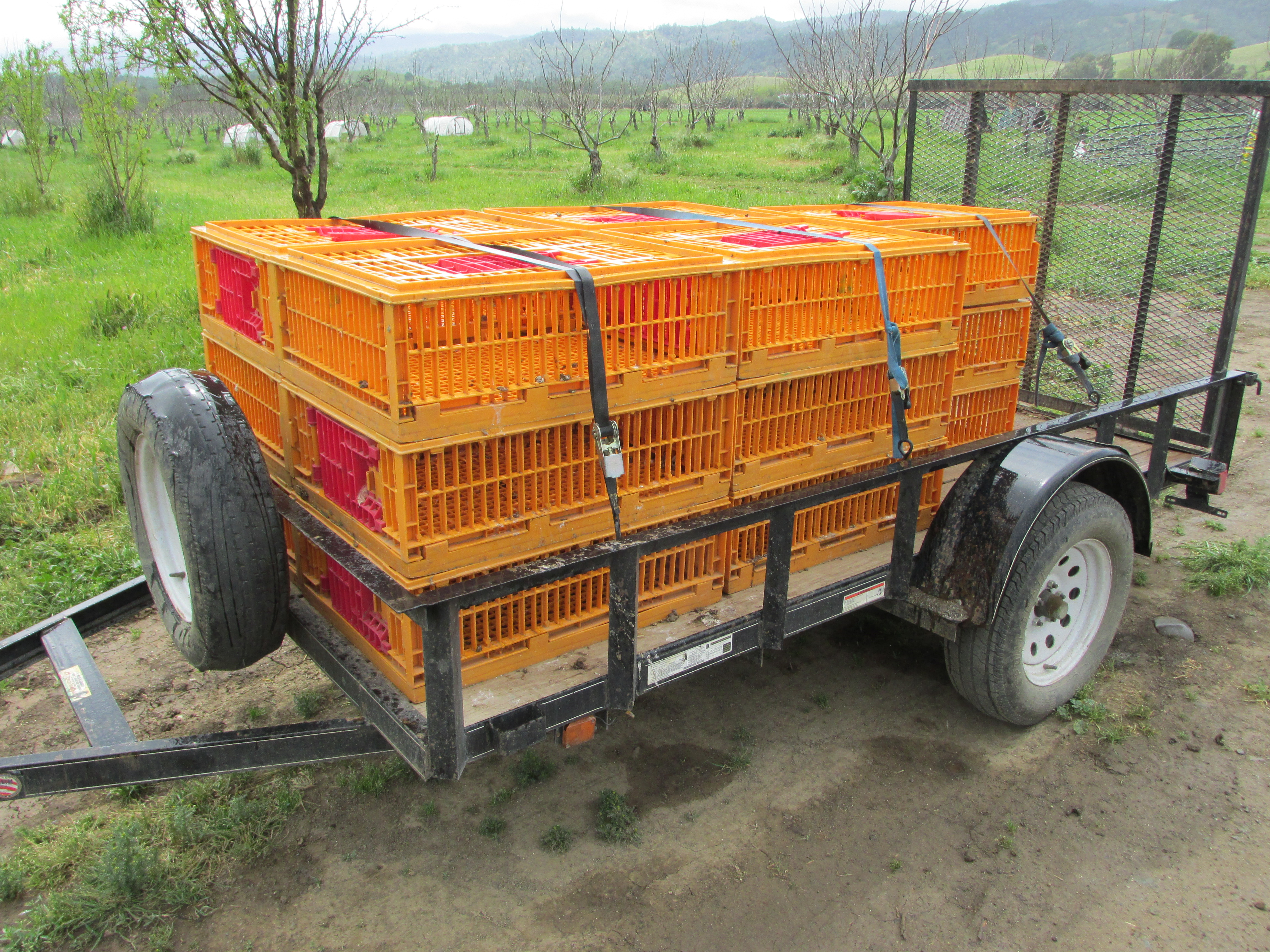 bird crates for transportation