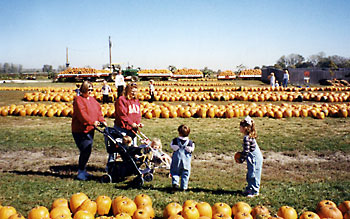 Rows of pumpkins for sale