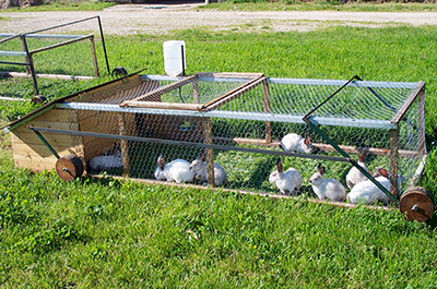 movable outdoor rabbit pen designed for forage