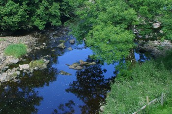 A riparian area example ~ www.clipart.com
