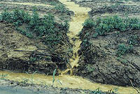 Runoff from poorly vegetated areas carries eroded sediments into streams