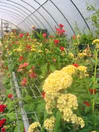 High tunnels protect high value crops.
