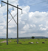 Sheep grazing under power lines