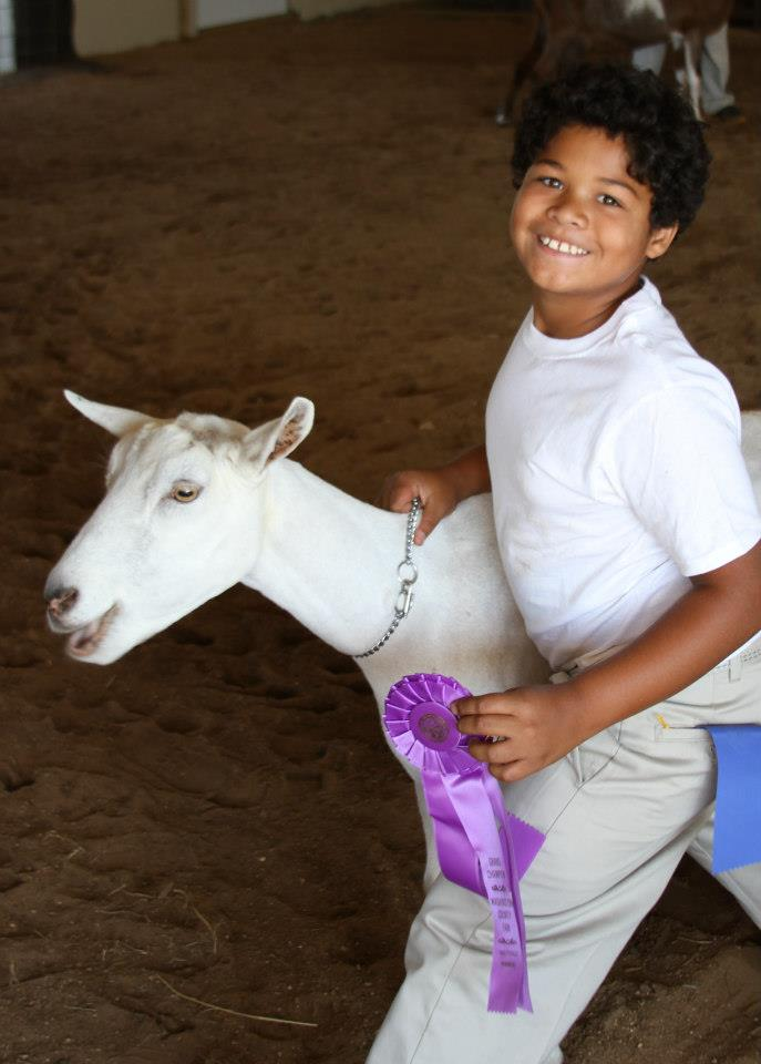 kid with grand champion ribbon at fair