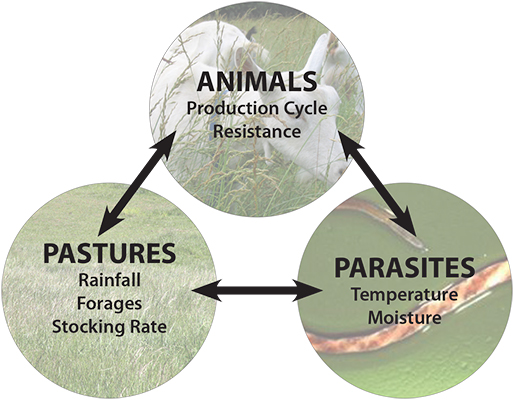 figure 1, managing parasites