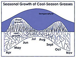 seasonal growth of cool-season grasses