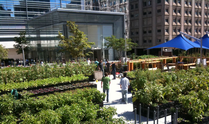 Riverpark Farm, New York City, urban agriculture