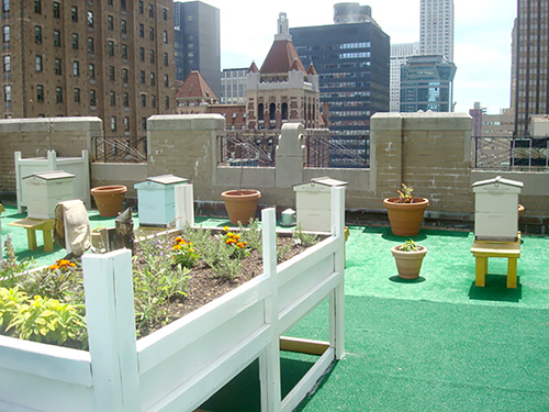 roof top bees, apiary